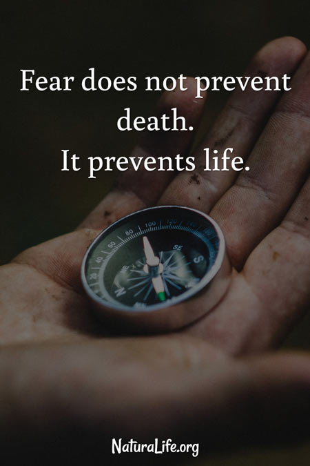 Fear Does Not Prevent Death. It Prevents Life. Motivational quote.