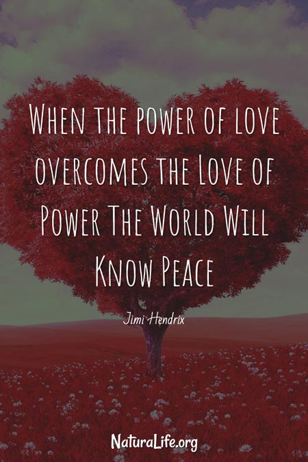 When the power of love overcomes the love of power, the world will know peace. A quote by Jimi Hendrix.